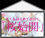 【ハコ暦】うららかな春の陽気に誘われて、「桜」を楽しむ日