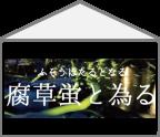 【ハコ暦】蛍に習う、惹き付け上手のカギ