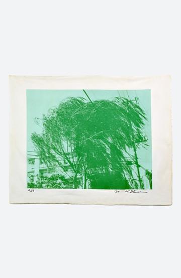 haco! 【アート】島 州一 「木のある風景」 <その他>の商品写真